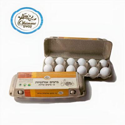 ביצים חינם מ- freshuk